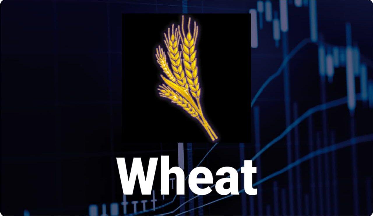 Стоимость пшеницы в ближайшее время может подорожать